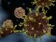 Il coronavirus è mutato
